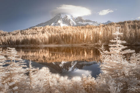 INFRARED ART FOR YOUR HOME GALLERY