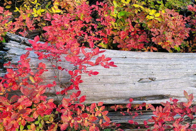 fall color in the Wallowa Mountains and eagle cap wilderness.