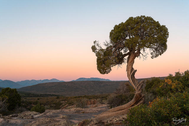 A lone tree at sunset in the Black Canyon of the Gunnison in Colorado.