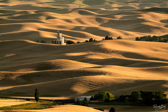 gold light washes across the Palouse wheat fields during the summer.