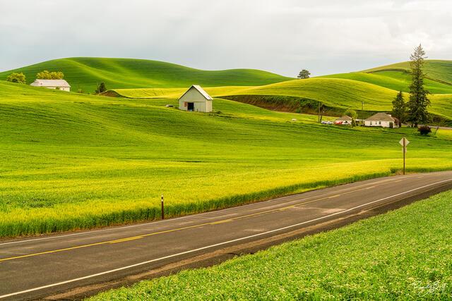 a lone farm on hwy 272 near Colfax, Washington
