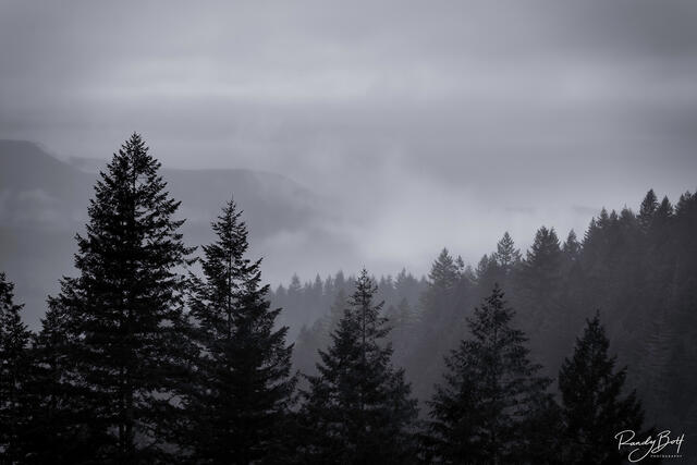 Wallace Falls area during a rainy day in black and white