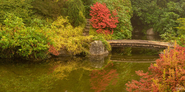 fall color and a small bridge in Kubota Gardens in Seattle