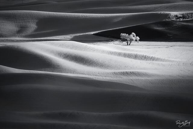 black and white infrared photo of the Palouse from Steptoe butte
