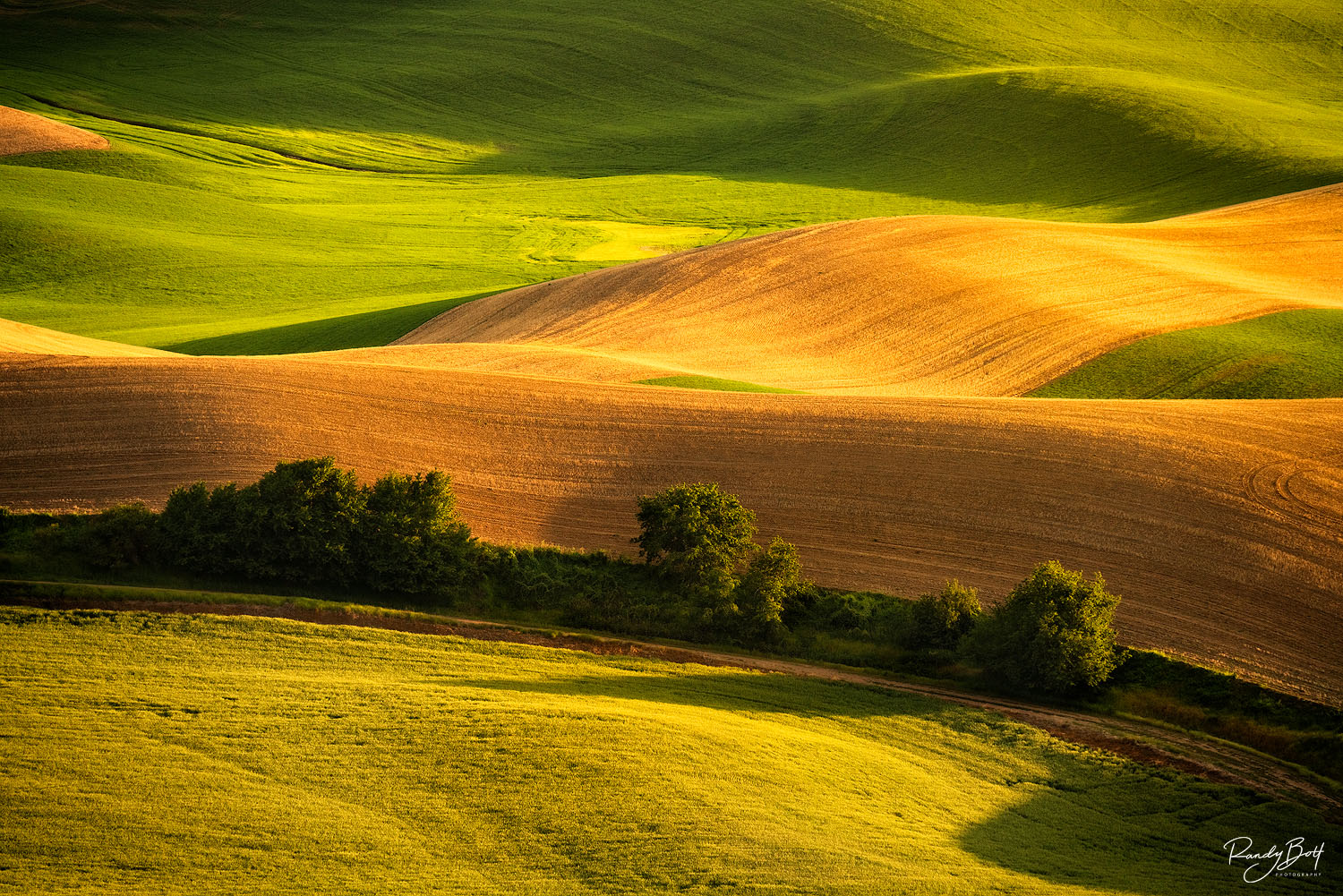 brown and green fields in the Palouse region of Washington State