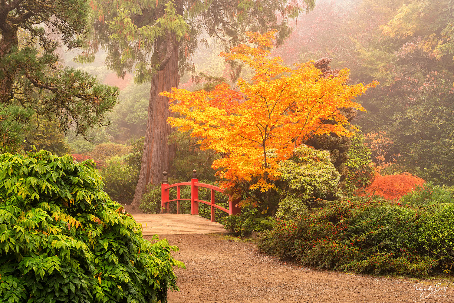 fall color at Kubota garden in Seattle