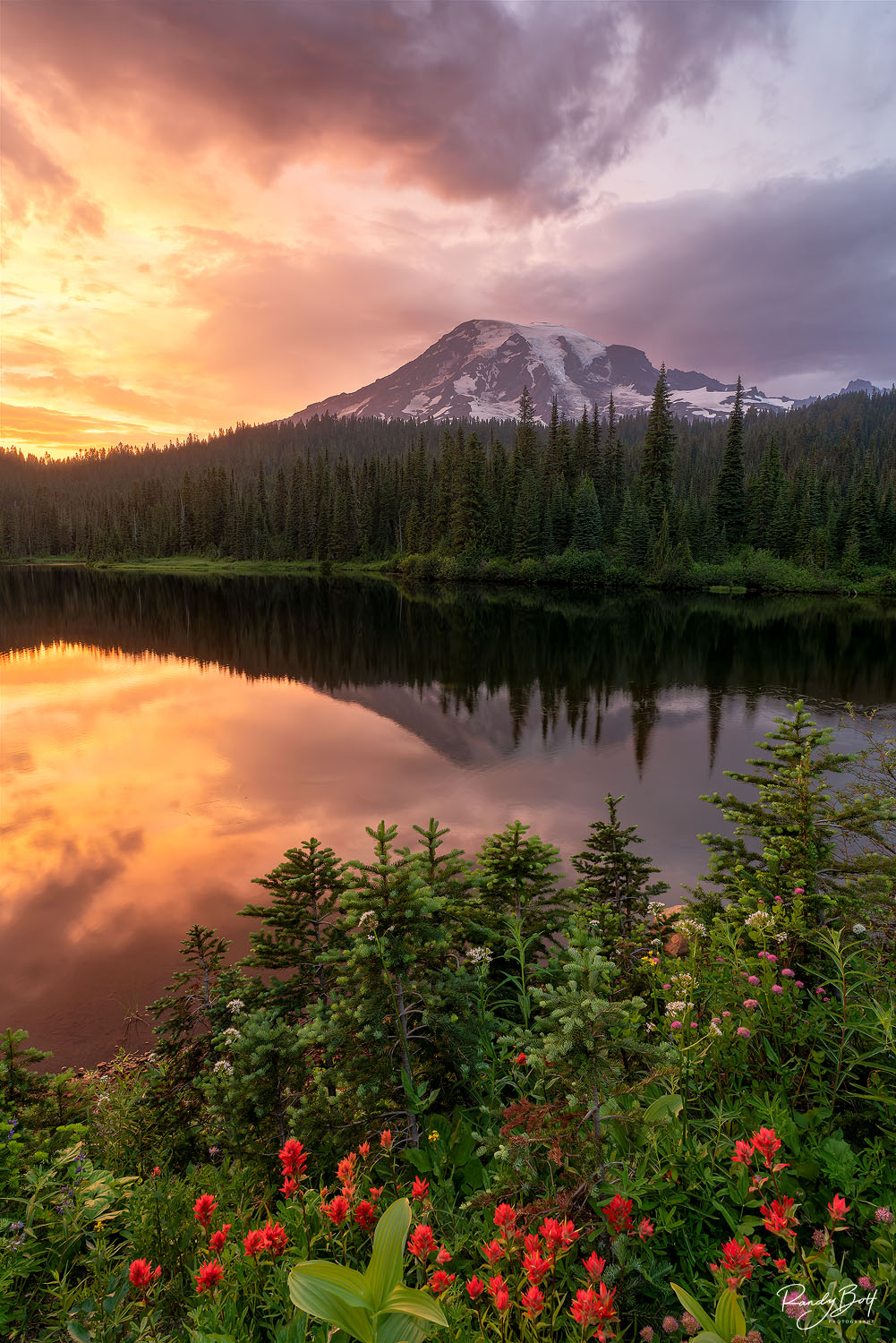 Sunset with mount rainier and Indian paintbrush at reflection lakes in mount rainier national park.
